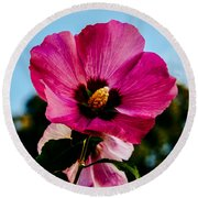 Baby Pink Hollyhock Round Beach Towel