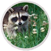Baby Raccoon Round Beach Towel by Jeanne White