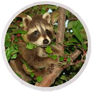 Round Beach Towel featuring the photograph Baby Raccoon by James Peterson