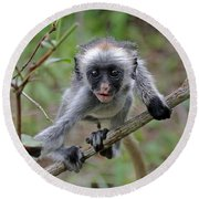 Baby Red Colobus Monkey Round Beach Towel