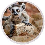 Baby Ringtail Lemur Round Beach Towel