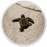 Baby Sea Turtle Round Beach Towel by Sebastian Musial