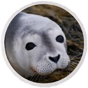 Baby Seal Round Beach Towel by DejaVu Designs