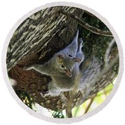 Round Beach Towel featuring the photograph Baby Squirrel On The Loose by Trina  Ansel