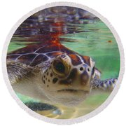 Baby Turtle Round Beach Towel
