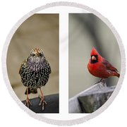 Backyard Bird Set Round Beach Towel