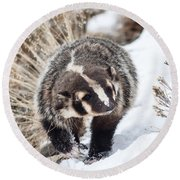 Badger In The Snow Round Beach Towel