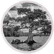 Bald Cypress - Bw Round Beach Towel