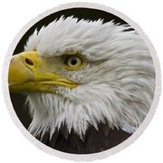 Bald Eagle - 7 Round Beach Towel