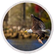 Bald Eagle In Flight Over Water Carrying A Fish Round Beach Towel