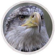 Bald Eagle - Juvenile Round Beach Towel