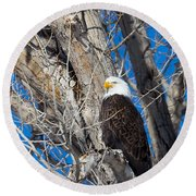 Round Beach Towel featuring the photograph Bald Eagle by Michael Chatt