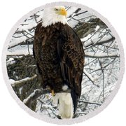 Round Beach Towel featuring the photograph Bald Eagle by Penny Meyers