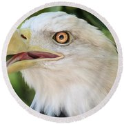 Round Beach Towel featuring the photograph American Bald Eagle Portrait - Bright Eye by Patti Deters