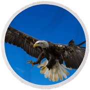 Bald Eagle Round Beach Towel by Scott Carruthers