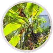 Banana Palm Tree With Luminous Shine Round Beach Towel