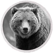 Banff Grizzly In Black And White Round Beach Towel