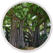 Banyan Tree At Honolulu Zoo Round Beach Towel
