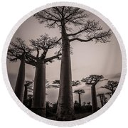 Baobab Avenue Round Beach Towel