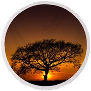 Baobab Round Beach Towel by Davorin Mance