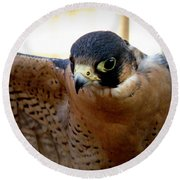 Barbary Falcon Wings Stretched Round Beach Towel