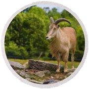 Barbary Sheep Round Beach Towel