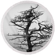 Bare Cypress Round Beach Towel by Melinda Ledsome