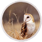 Barn Owl Tyto Alba Standing In Golden Round Beach Towel