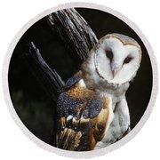 Barn Owl Tyto Alba Worldwide Range High Round Beach Towel