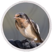 Round Beach Towel featuring the photograph Barn Swallow On Rope I by Patti Deters