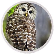 Round Beach Towel featuring the photograph Barred Owl by Christina Rollo