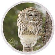Barred Owl Hunting Round Beach Towel