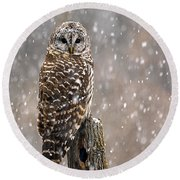 Barred Owl In A New England Snow Storm Round Beach Towel