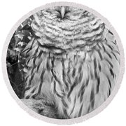 Barred Owl In Black And White Round Beach Towel by John Telfer