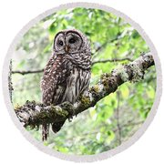 Barred Owl Round Beach Towel by Peggy Collins