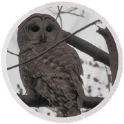 Round Beach Towel featuring the photograph Barred Owl Perched by Emmy Marie Vickers