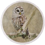 Round Beach Towel featuring the photograph Barred Owl Portrait by Betty LaRue