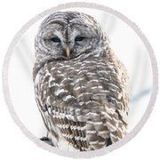 Barred Owl2 Round Beach Towel