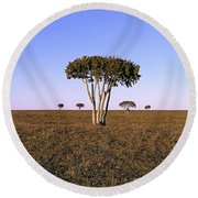 Barren Tree Round Beach Towel