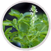 Basil With White Flowers Ready For Culinary Use Round Beach Towel by David Millenheft