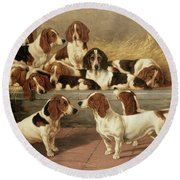 Basset Hounds In A Kennel Round Beach Towel