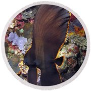 Round Beach Towel featuring the photograph Bat Fish by Sergey Lukashin