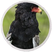 Bateleur 3 Round Beach Towel by Arterra Picture Library