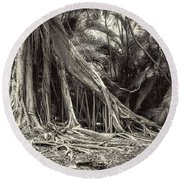 Strangler Fig Round Beach Towel
