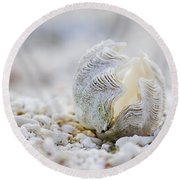 Beach Clam Round Beach Towel