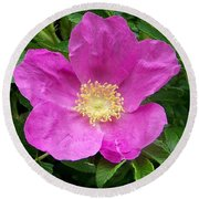 Pink Beach Rose Fully In Bloom Round Beach Towel by Eunice Miller
