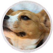 Beagles Dreams Round Beach Towel