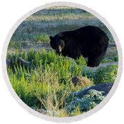 Bear 3 Round Beach Towel