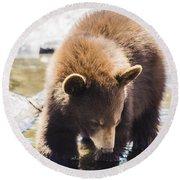 Bear Cub Round Beach Towel