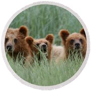 Bear Cubs Peeking Out Round Beach Towel